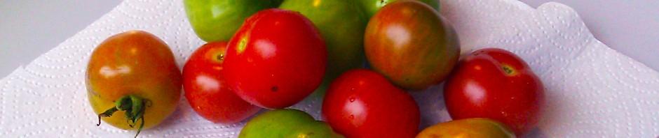 Tomater fra kjøkkenhagen