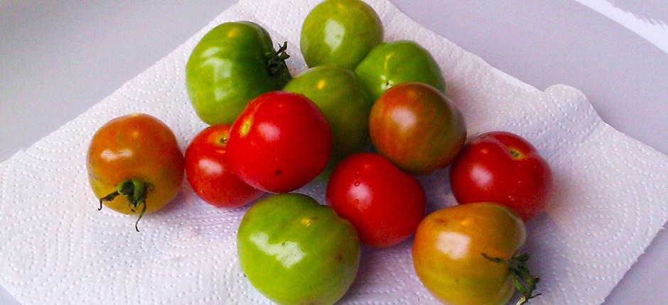 Tomater fra egen kjøkkenhage