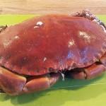 Høstdelikatessen krabbe