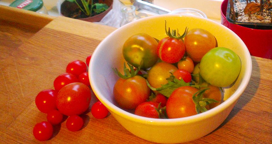 """Tomater fra egen kjøkkenhage; cherrytomater og ørsmå """"Tiny Tim"""" tomater"""