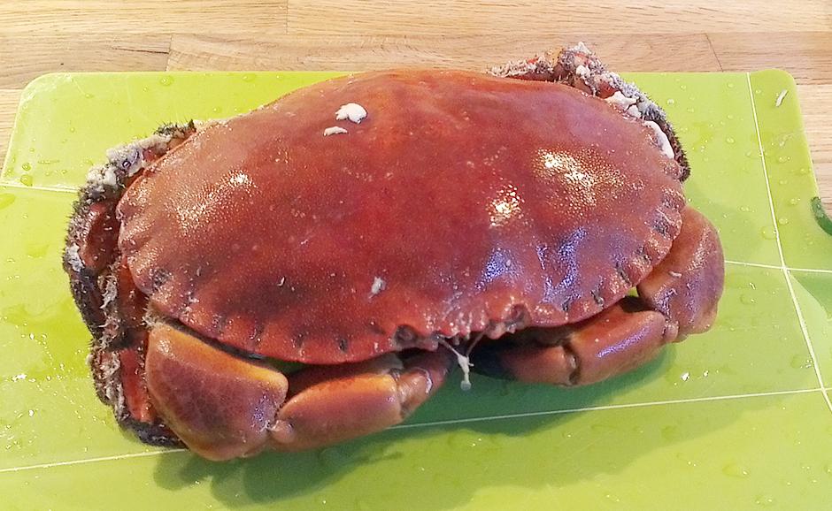 Holdbarhet Kokt Krabbe